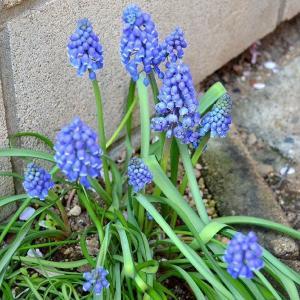 ☆★満開の花々、今年の春は、ウキウキ感ありません。コロナに負けるな!、お家で過ごそう!★☆