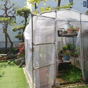 ☆★やっとビニール温室の覆いを取りました。庭がスッキリ、庭仕事が本格的になってきました。★☆
