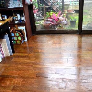☆★南の植物を、全部戸外に出しました、フローリング塗料で、床を綺麗にしました。孫とは、LINEで会っています。★☆