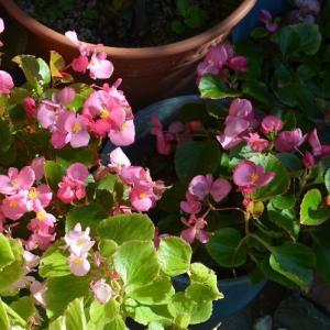 ☆★此処の所、いい天気が続いています。小春日和に誘われて庭に出ています。★☆