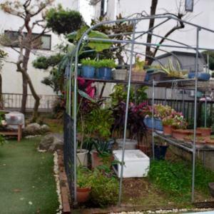 ☆★庭のビニールハウスの覆いを取りつけました。鉢植えの草花の冬越しです。★☆