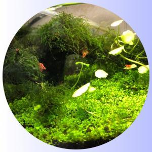 ♪極火蝦ʕ•ᴥ•ʔ