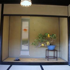 日本庭園の楽しみ(盆栽苑)★昭和記念公園