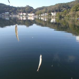 今シーズン初の榛名湖のワカサギ釣り・・・