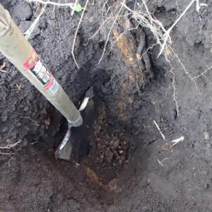 ナガイモ掘り・・・