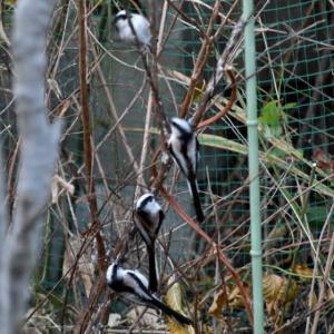 家庭菜園の野鳥たち・・・