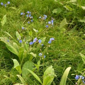 高原の広葉樹林で見られた花・・・
