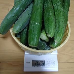 採れ過ぎ夏野菜の消費法2(キュウリ・ナス煮物)