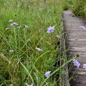 榛名・沼ノ原の花と虫たち・・・