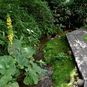 松原湖畔に咲く花・・・
