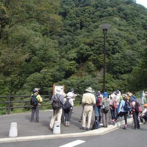 吾妻渓谷で自然観察会