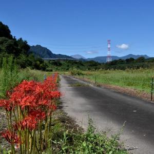 あまぬま写ん歩:刈り取り前の田んぼの生き物・・・