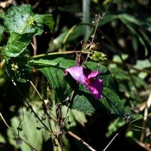 あまぬま写ん歩:野に咲く花・・・