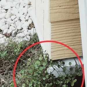 玄関の観葉植物が2階のベランダから顔出し!? 良いの?切った方が良いのかな〜?!