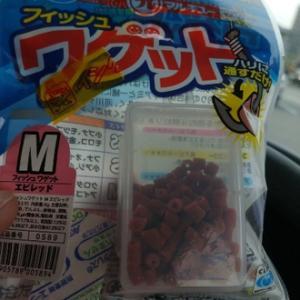 """マルキューのフィッシュ """" ワゲット """" を発見&ゲット〜♫"""