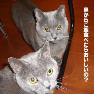 (思い出48)鼻から胃カメラ!?