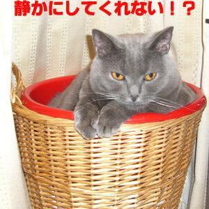 (思い出50)猫用最強ベッド