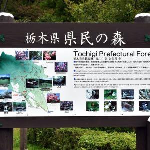 栃木県民の森でバードウォッチング