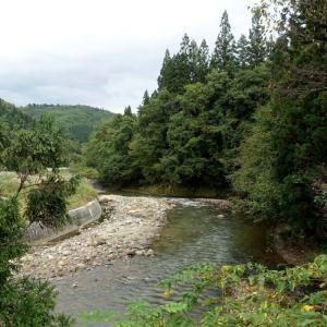 紅葉狩り&探鳥で山形県へ・大江町のヤマセミ。証拠写真(2021年10月15日)