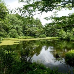 戸隠森林植物園でバードウォッチング