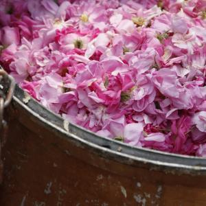 女性を癒すダマスクローズの香り。