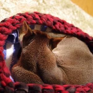 手編みベッドとヒーターでぬっくぬく。