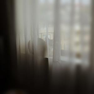 朝から窓辺でまったりんこ。