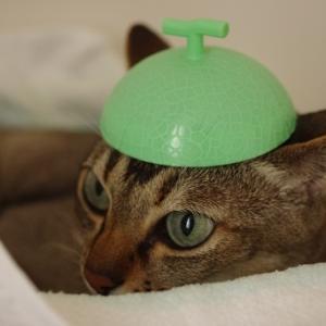 おしゃれな水泳帽。