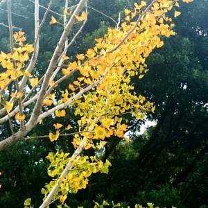 秋いろとりどり