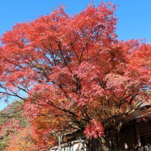 修善寺 虹の郷で紅葉がキレイ!