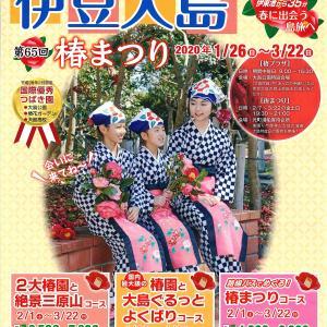 伊豆大島 第65回 椿まつり(1月26日から開催)