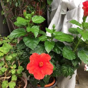 今日の花🌼