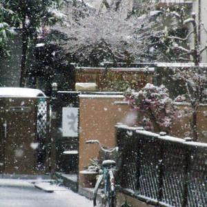 今時,,,,雪って!