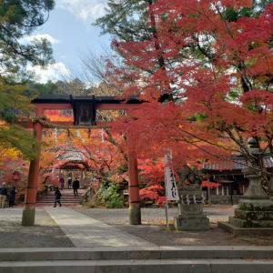 京都散策~紅葉狩り♪鍬山神社