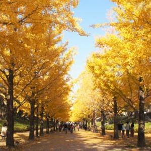 あづま総合運動公園のいちょう並木