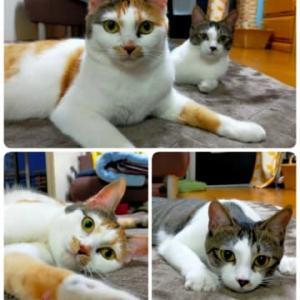 猫ゴロゴロ