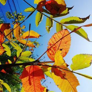能登も秋色に…