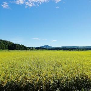 色づく田んぼの風景