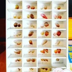 三十六歌仙貝コレクション~36種類ぜんぶ見つけられるかな?~