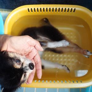 のんちゃん、お風呂!