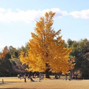 学びの森は素敵な公園でした。