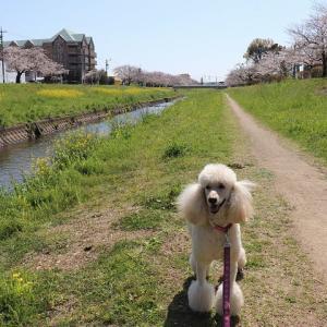 佐奈川堤防で理想のお散歩♪