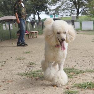 公園ランで出会った可愛い子。