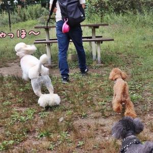石臼挽蕎麦 東間さん【軽井沢旅行1】