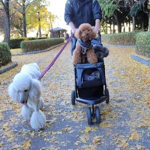 秋色公園。