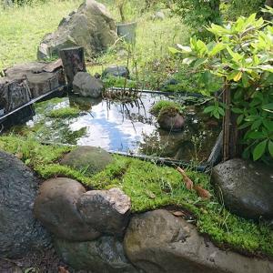 庭にビオトープ池を作っている。
