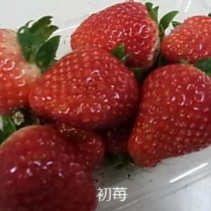 奈緒苺食べる