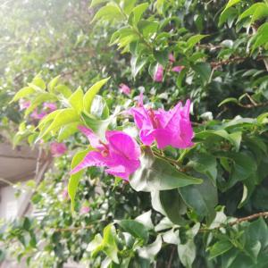 沖縄らしい風景に癒されています。
