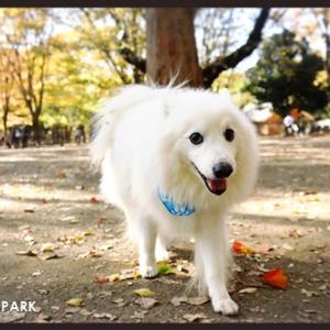 4年ぶりの代々木公園ドッグラン♪