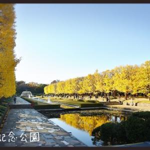 昭和記念公園のイチョウ並木☆彡